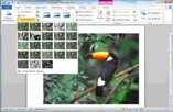 Applying effects to pictures and shapes in Microsoft PowerPoint